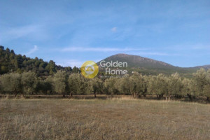 Land-10000-sqm-Aidipsos-(Euboea)-80.000-euro | Golden Home Real Estate