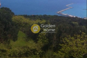 Land-4100-sqm-Kymi-(Euboea)-75.000-euro | Golden Home Real Estate